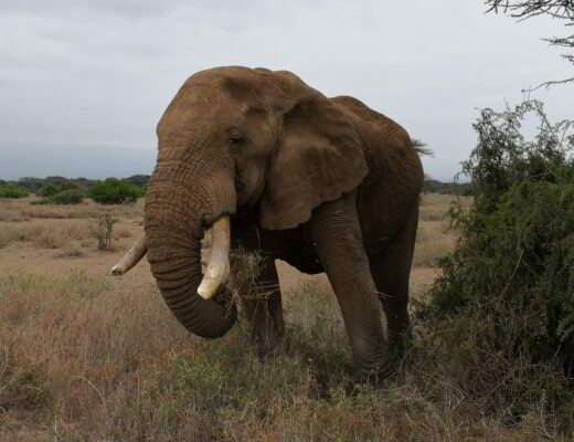 An elephant: close and personal