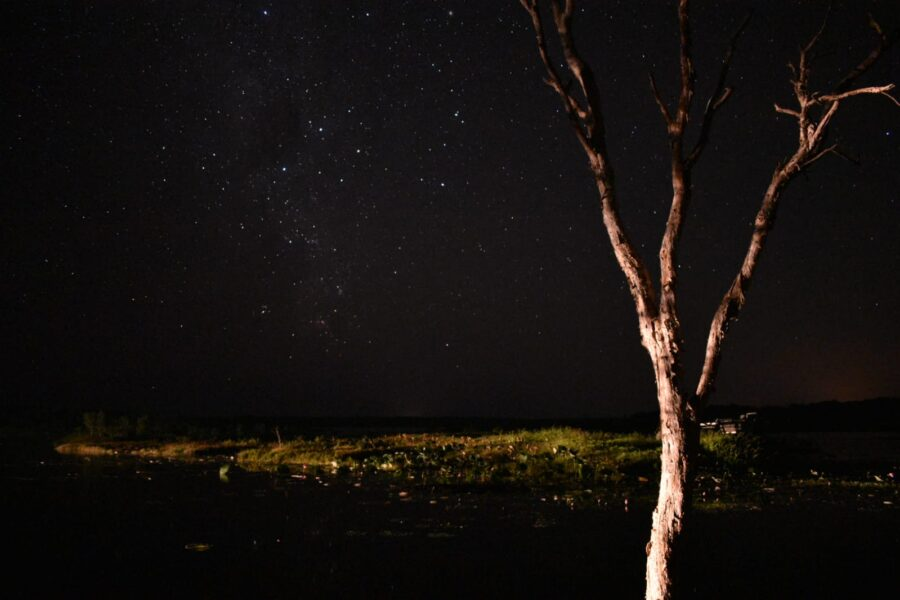 A view of the stars, with a tree in the corner.